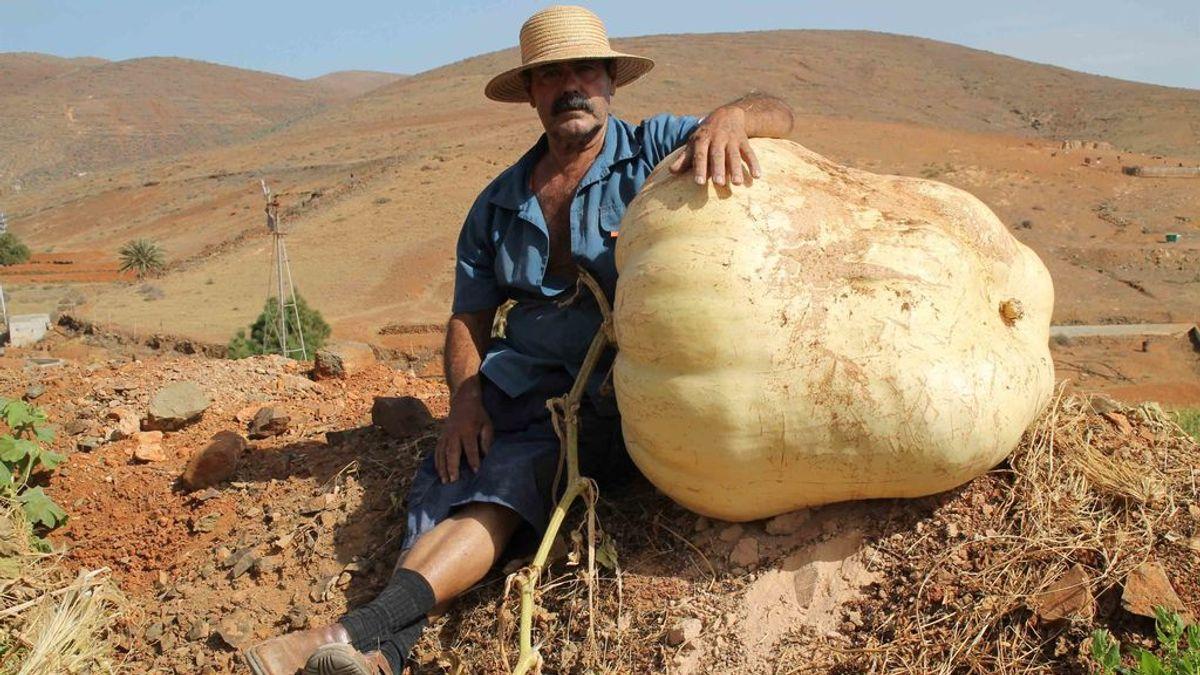 La calabaza gigante de casi 120 kilos que ha sorprendido a un pueblo de Fuerteventura