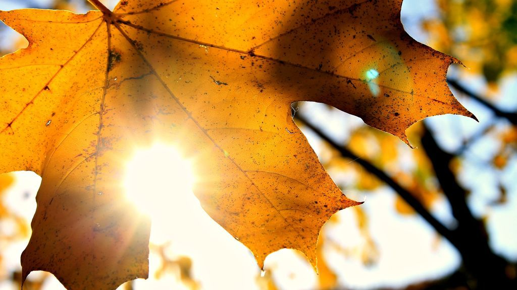 otoño soleado