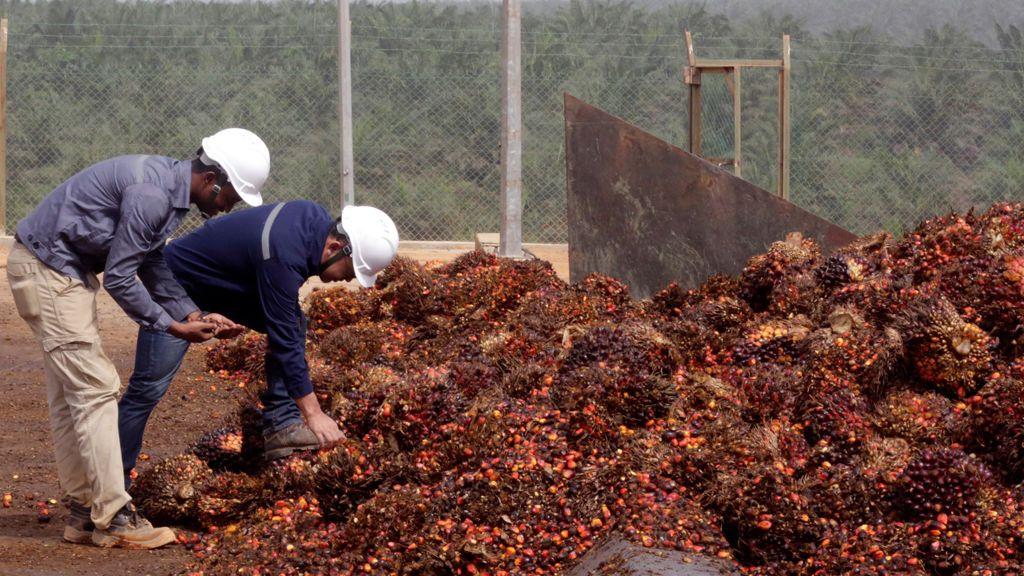 Greenpeace acusa a 25 productores de aceite de palma de deforestar 1.300 km2 de selva