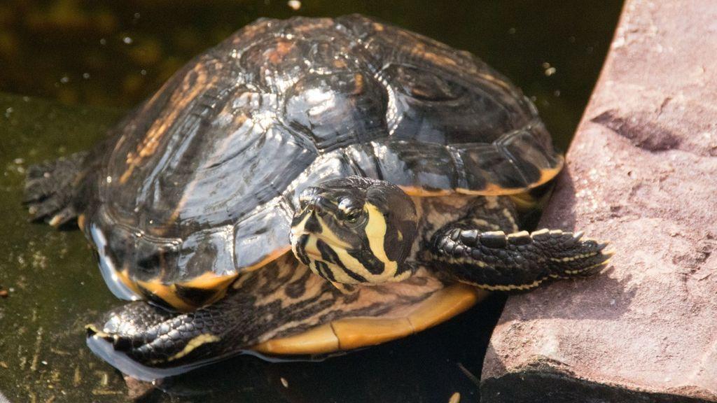 Sale de fiesta en Tenerife y acaba en urgencias porque tenía una tortuga muerta en su vagina
