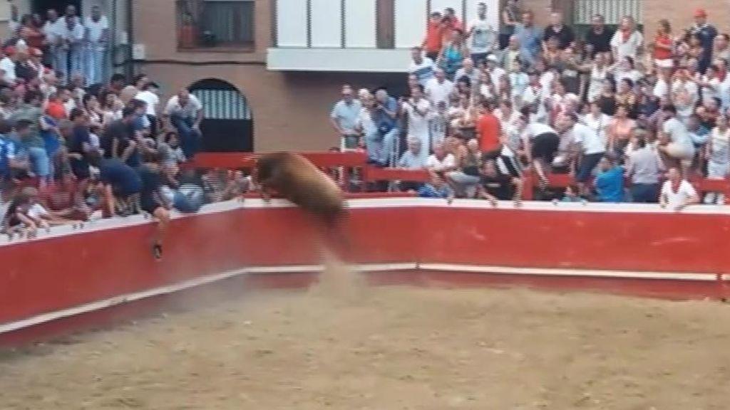 Un toro se escapa de la plaza y siembre el pánico en las calles de Villafranca