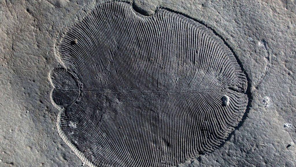 Dickinsonia, el 'Santo Grial' de la paleontología
