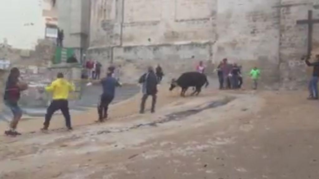 Un vídeo muestra el sufrimiento de una vaquilla en unos festejos en Cuenca
