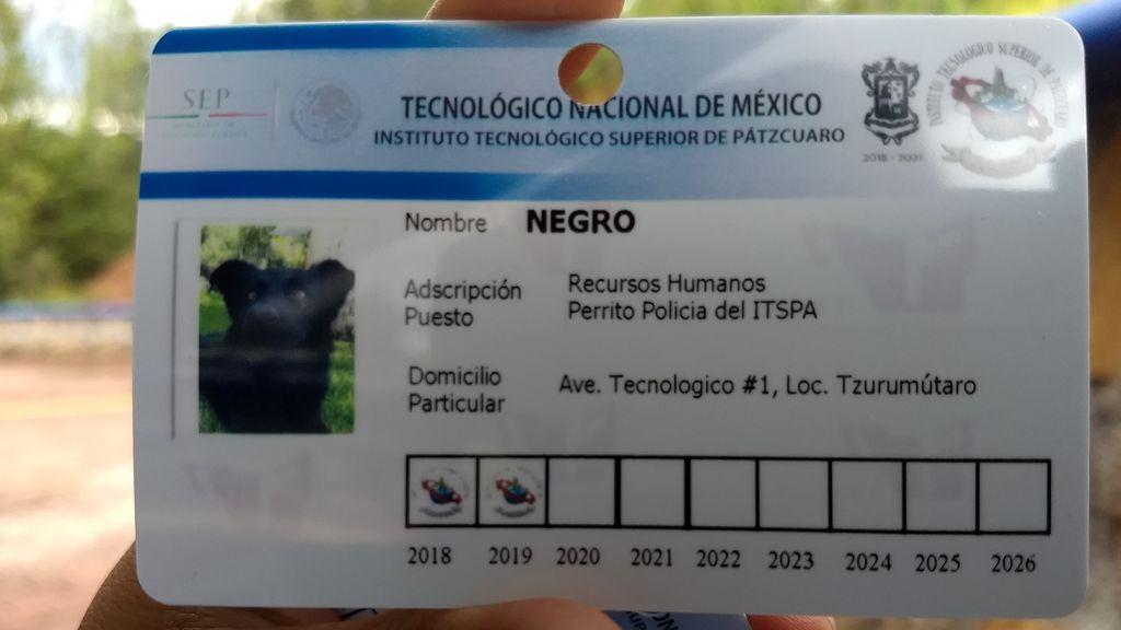 Tres perros reciben su carné del Instituto Tecnológico Superior de Pátzcuaro (ITSPA)