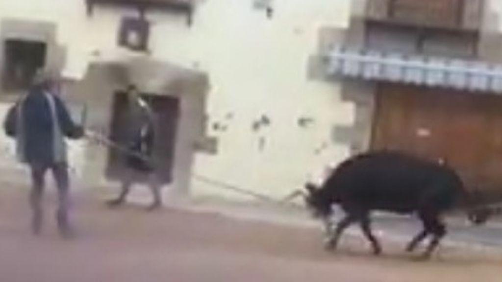 Denuncian el maltrato que sufre una vaquilla en unos festejos celebrados en Cuenca