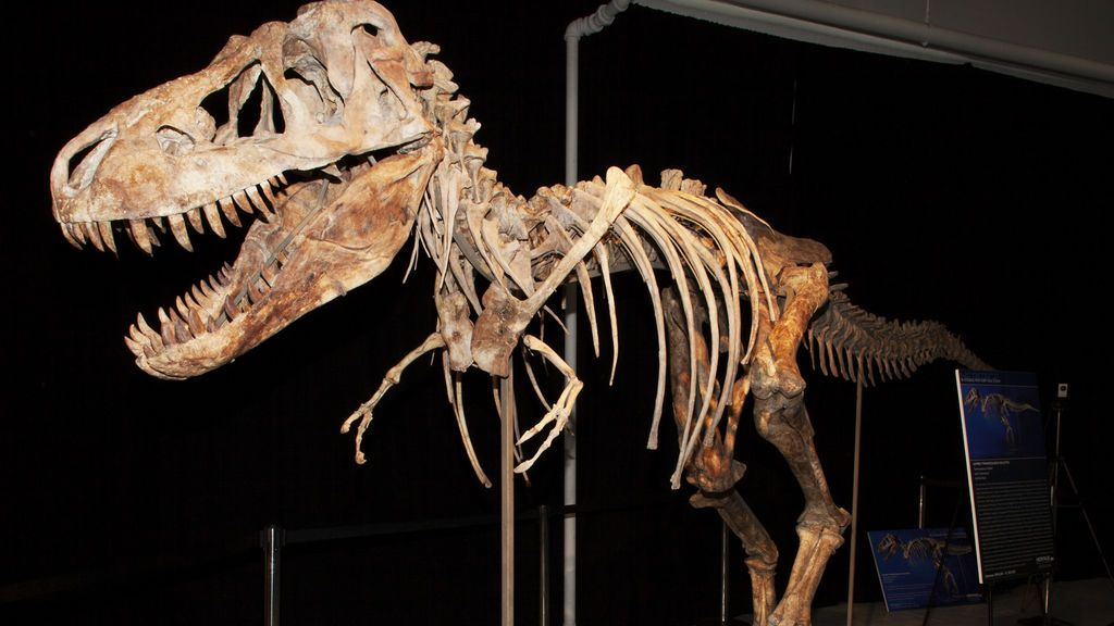 Millones de años después de su extinción, persiste el misterio sobre los dinosaurios