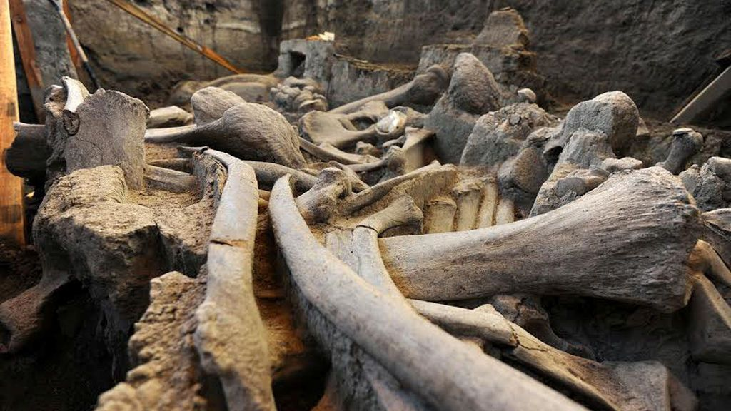 Hallan nuevos restos de mamut de un millón de años en La Canonja (Tarragona)