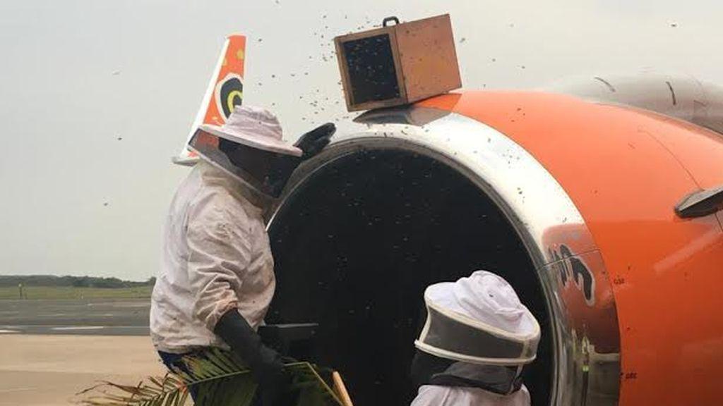 20.000 abejas alojadas en el motor de un avión causan el retraso de tres vuelos
