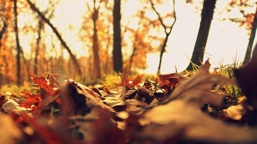 otoño frio
