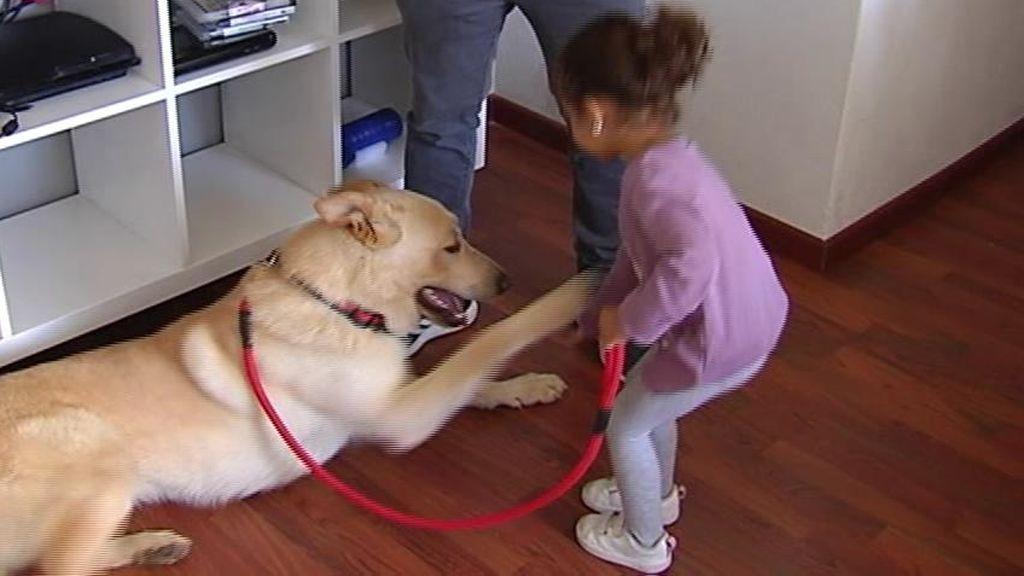 Nunca hay que dejar a los niños solos con un perro