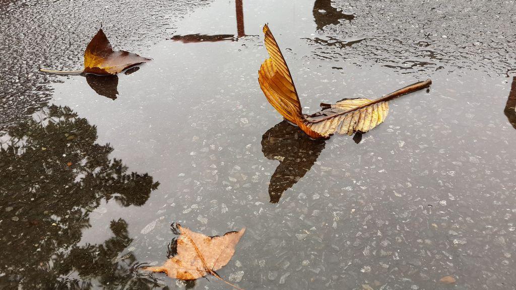 llover otoño