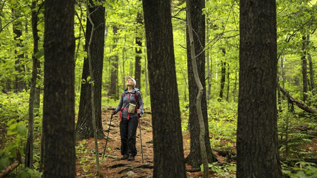Los beneficios del Shinrin-Yoku, la nueva moda de hacer terapia antiestrés en bosques
