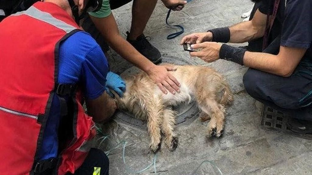 Bomberos salvan a un perro inconsciente tras rescatarle de un incendio en Sevilla