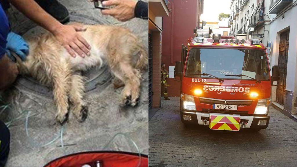 Rescatan a un perro inconsciente en un incendio en Sevilla