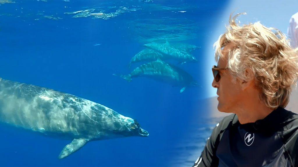 Jesús Calleja se lanza al océano: sigue el rastro de un grupo de zifios junto a un gran equipo de biólogos