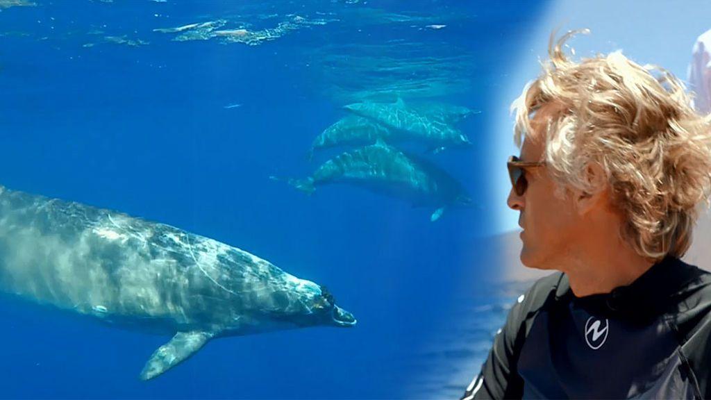 Calleja completa su misión en El Hierro: Nos presenta al gran desconocido del océano: el zifio