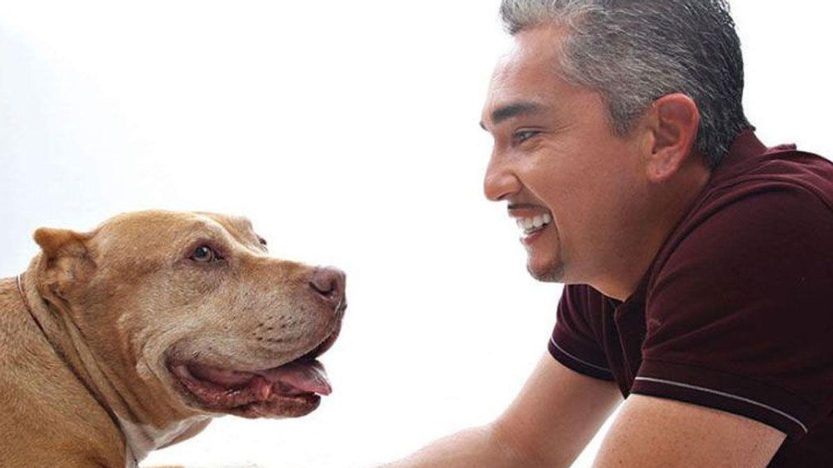 ¡Me mudo! 7 consejos para conseguir que tu perro se adapte a su nueva casa