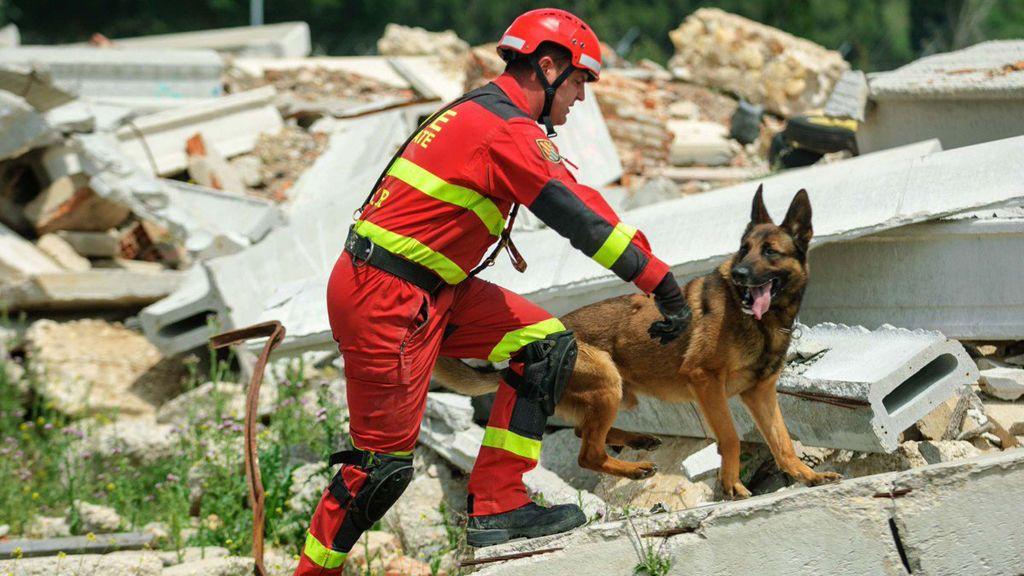 Así trabajan los perros de la UME: buscan al pequeño Artur, desaparecido en las inundaciones de Mallorca