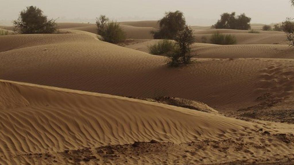 Un cambio climático pudo haber estimulado la evolución humana