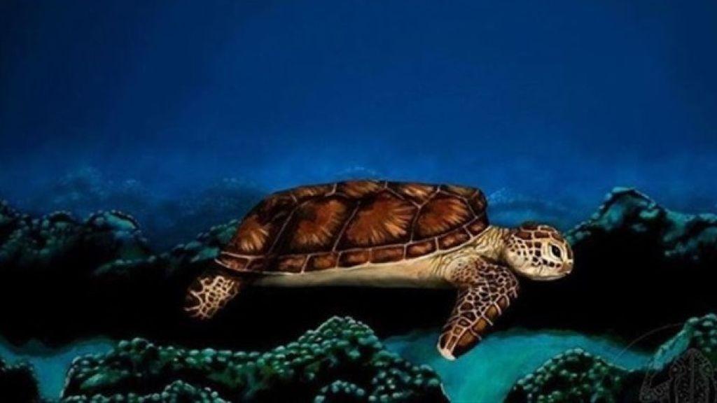 Nunca adivinarías que es en realidad esta tortuga
