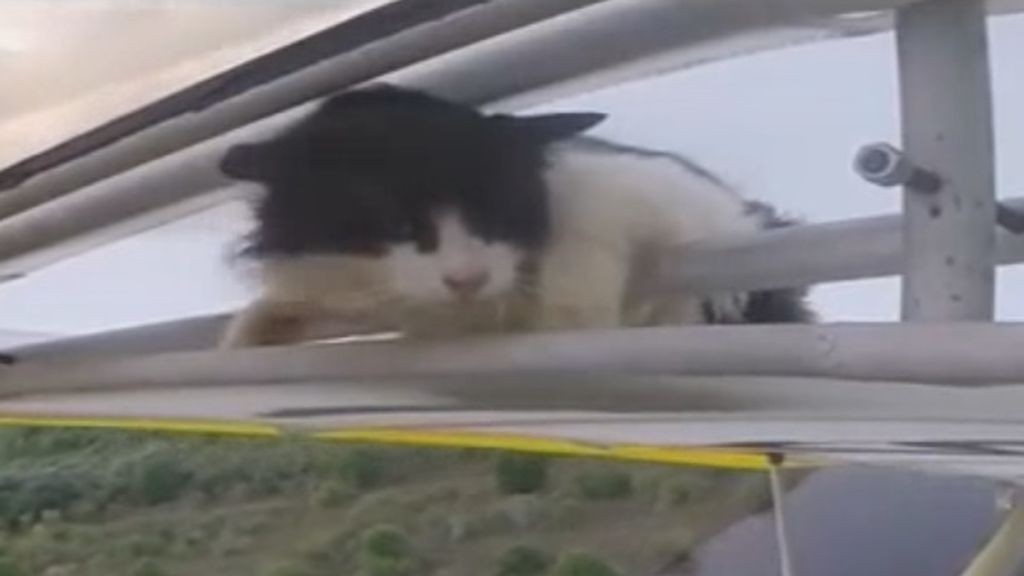 Sorprendidos En Pleno Vuelo Por Un Gato Escondido En El Avion