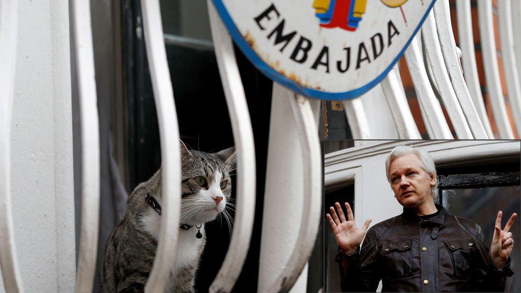 Las medidas que Ecuador impone a Assange: desde evitar interferir en cuestiones políticas hasta cuidar bien al gato
