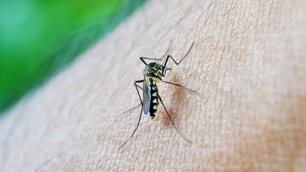 Tercer caso de dengue en España en otra persona que no había viajado a zonas de transmisión del virus