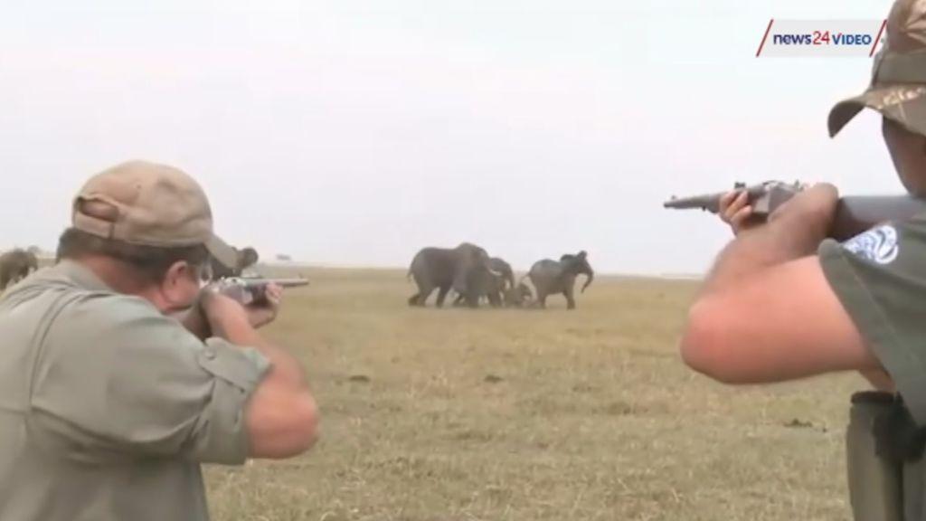 Hacen públicas las imágenes de una cacería de elefantes para encontrar a sus responsables en Namibia