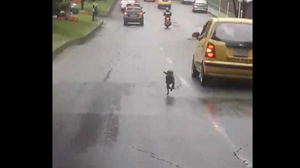 perro-taxi-colombia