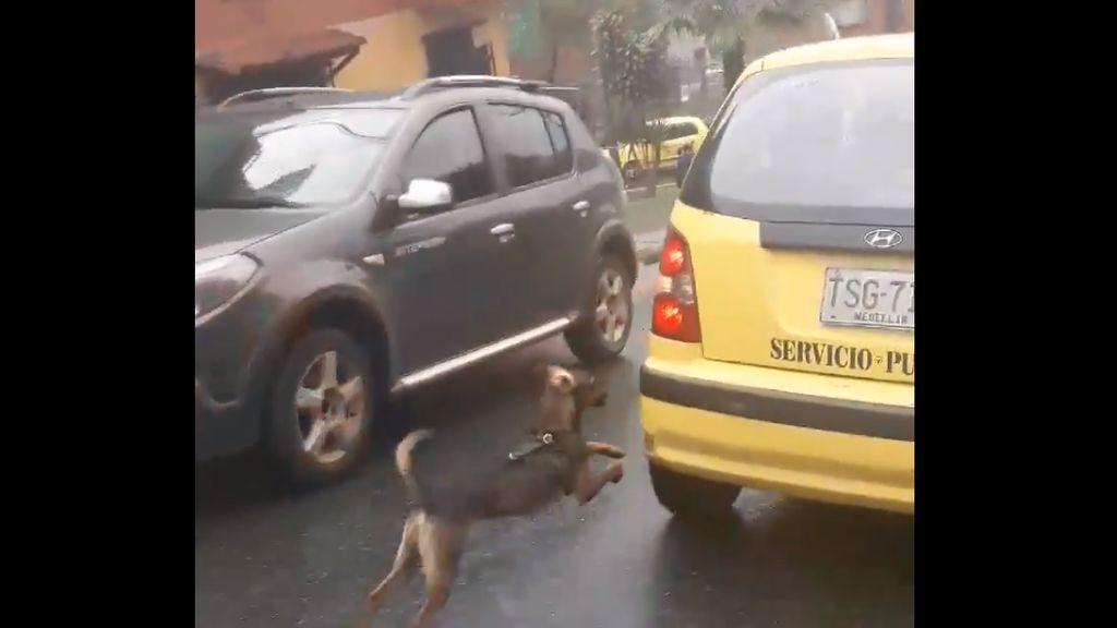 perro-taxi