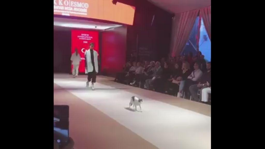 Un gatito se convierte en el protagonista de un desfile de moda en Estambul