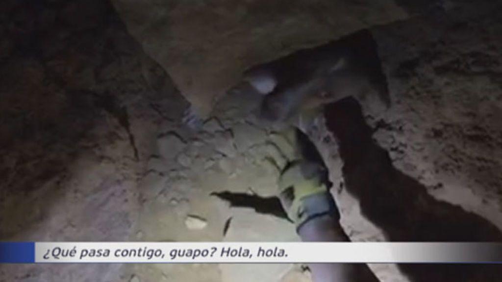 Guardias Civiles se emplean a fondo para rescatar a un perro en Almería
