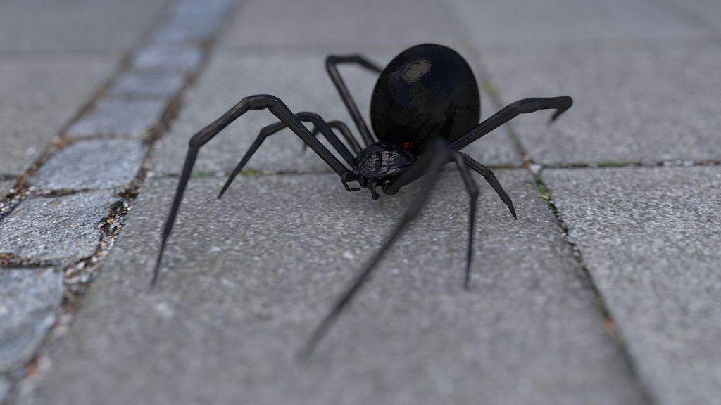 Un hombre incendia su casa al intentar matar una araña con un soplete