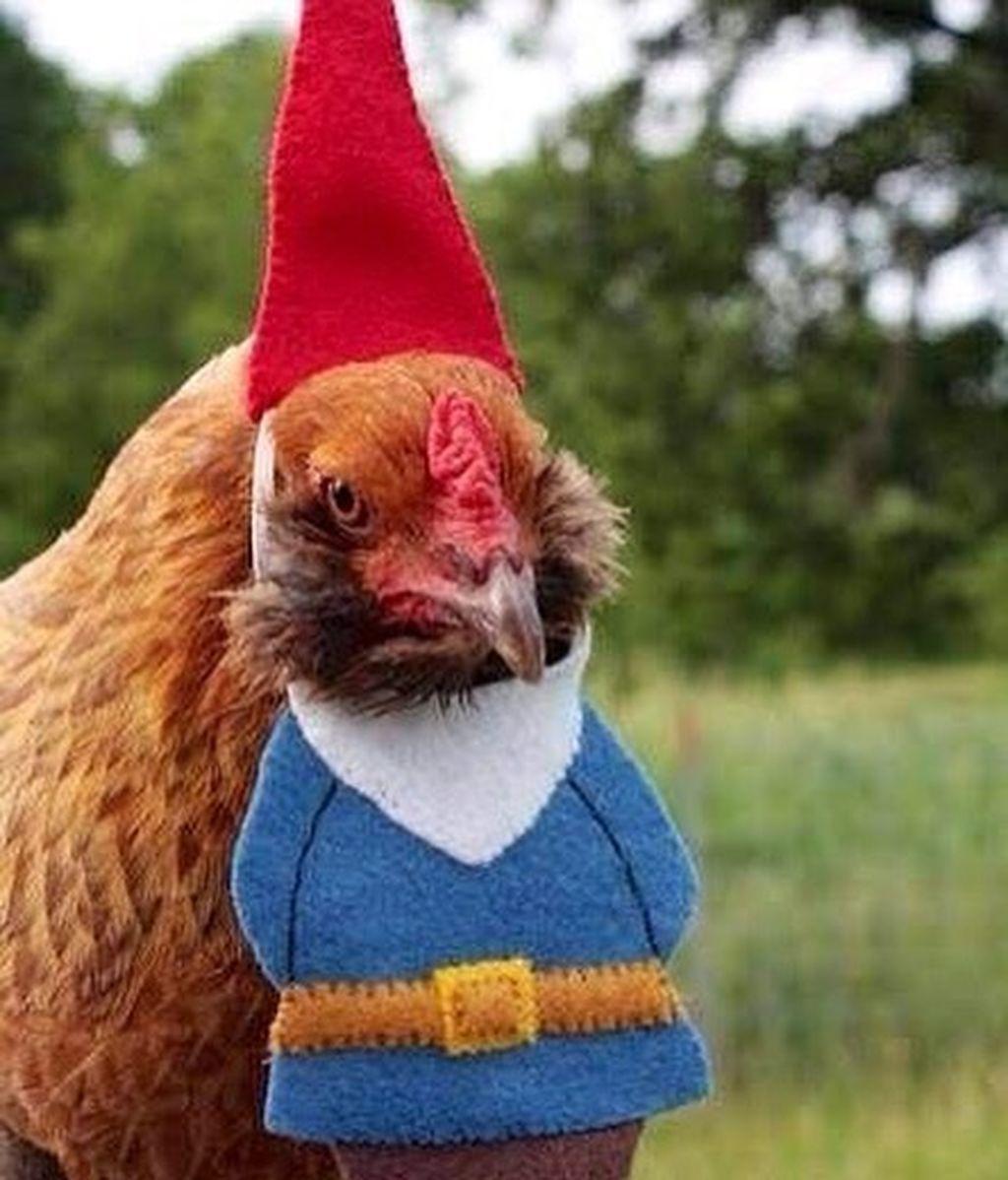 El gobierno de EEUU se ha visto obligado a pedir que dejen de disfrazar a las gallinas por Halloween