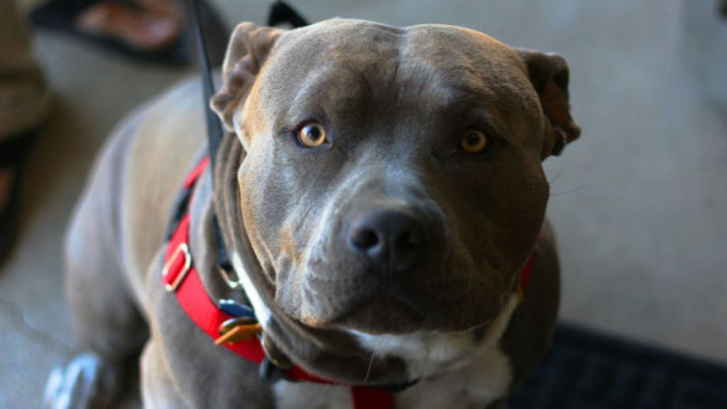 Buscan casa de acogida para la perra que mordió el pene a un vecino de Reus