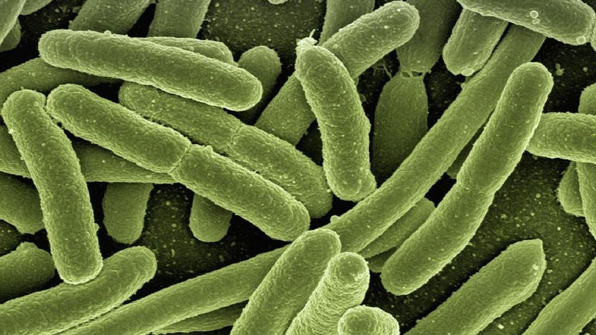 Encuentran un antídoto contra el botulismo, el compuesto tóxico más conocido