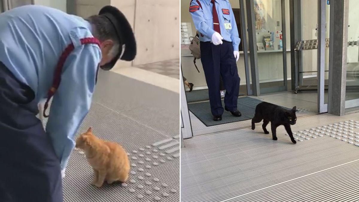 Dos gatos se hacen famosos por llevar dos años intentando entrar en un museo de Japón