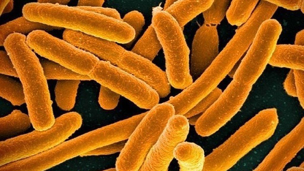 La resistencia a los antibióticos mata a 33.000 personas al año en Europa