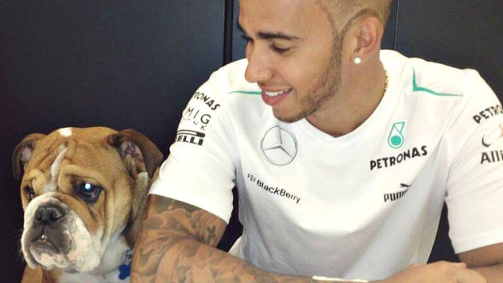 El perro de Hamilton cobra más que un piloto de Fórmula 1