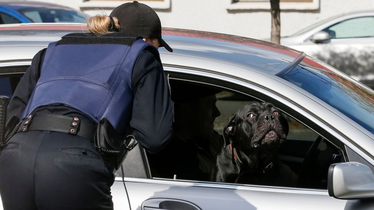 Viajar con tu mascota suelta dentro del coche, ¿tiene multa?