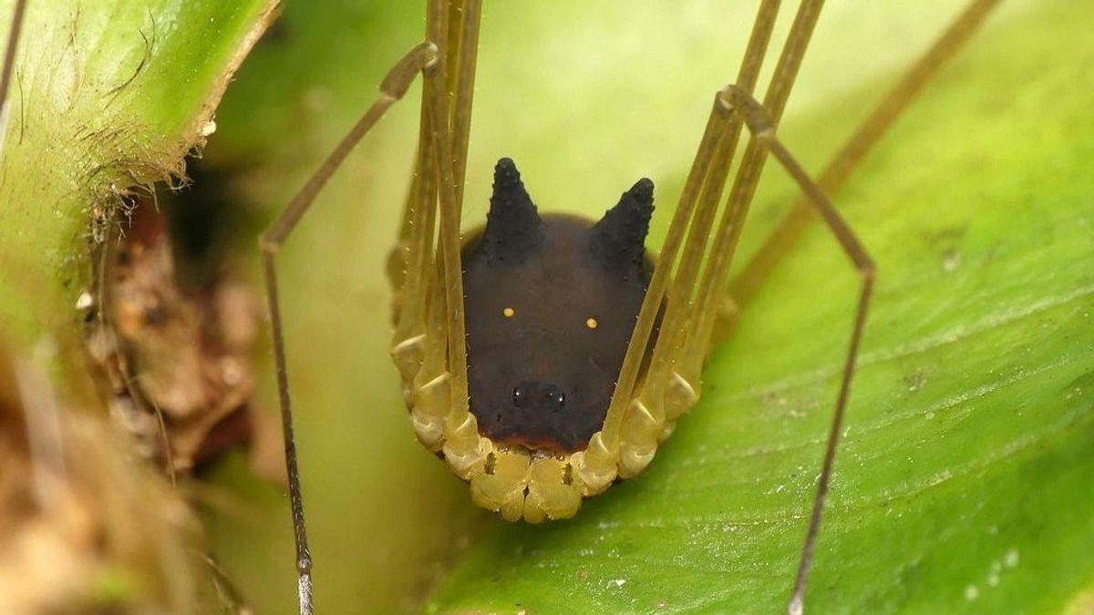 Encuentran una araña con cabeza de perro en la selva tropical de Ecuador