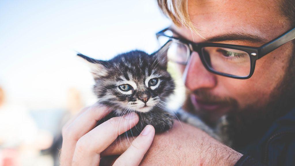 mascota-gato