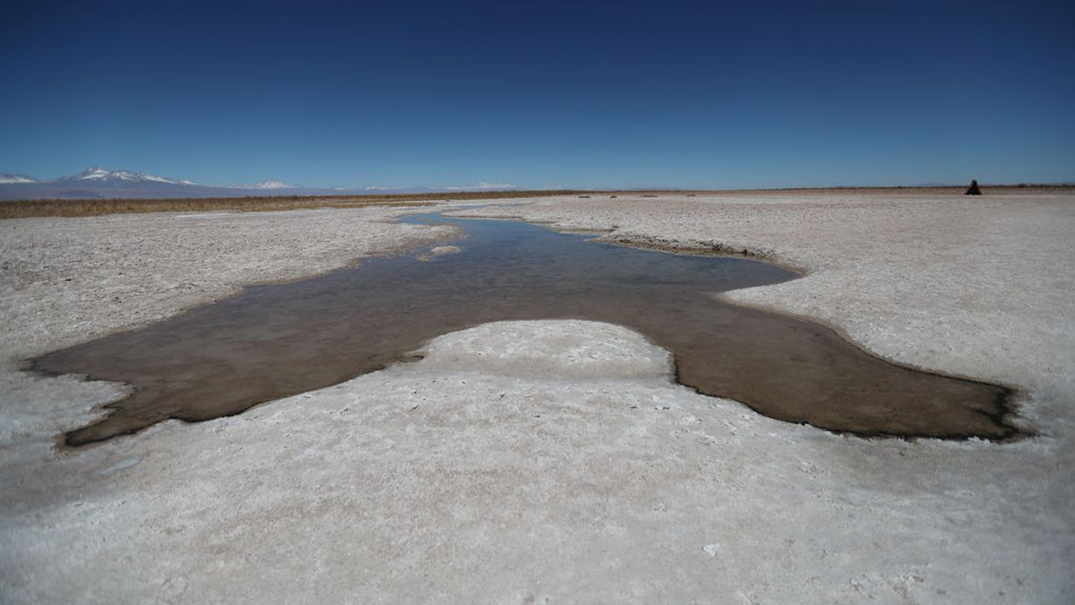 La vida en el desierto más seco de la Tierra muere al llover por primera vez en siglos