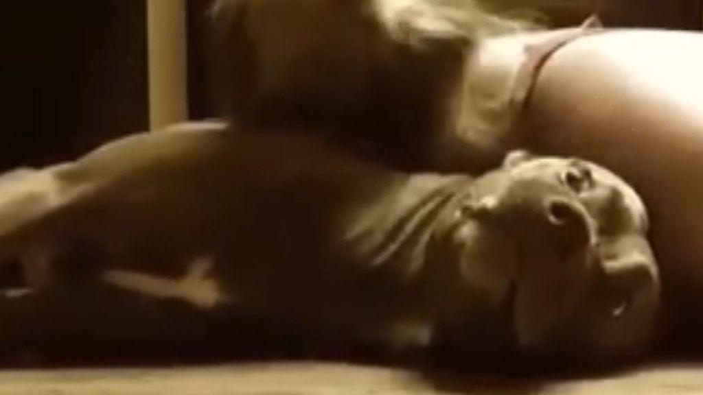 Colt, el perro que protege a su dueña en las crisis de epilepsia