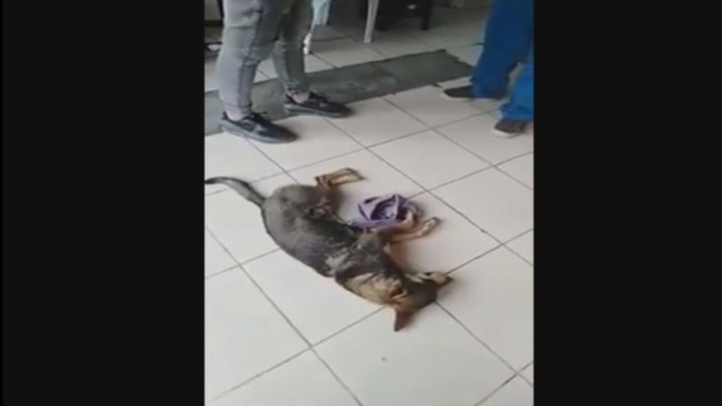 Viral indignante: veterinario se niega a atender a un perro callejero porque no le pagan