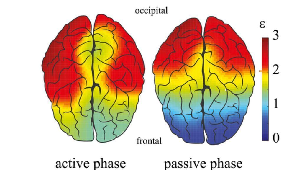 La personalidad deja huella en nuestro cerebro y, no, los más listos no son más eficaces