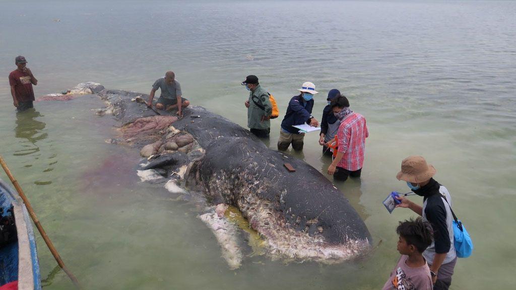 El cadáver de una ballena con más de 1.000 plásticos en su estómago evidencia el grave problema en nuestros mares