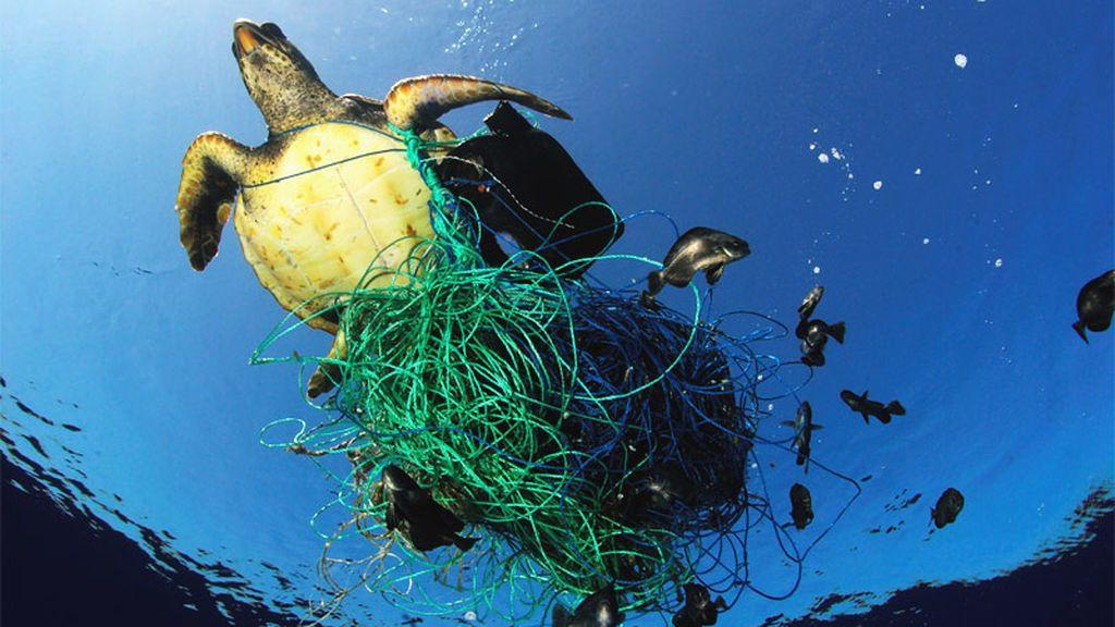 La 'ola' de plásticos en los océanos: acaba con el ecosistema y vuelve a los humanos