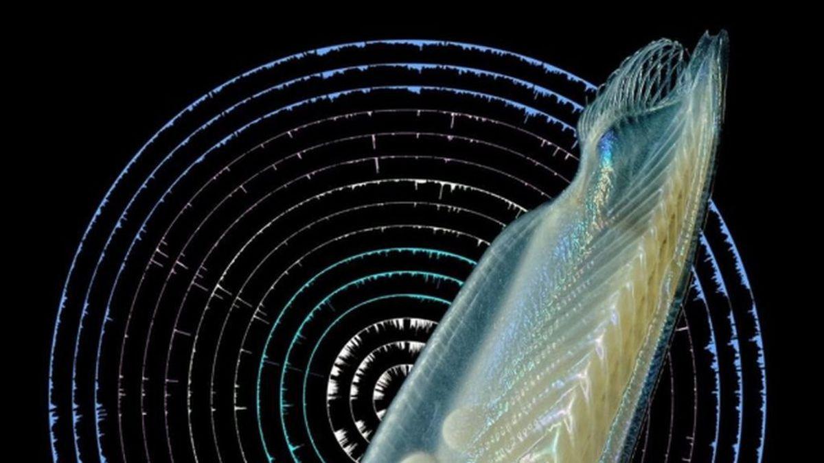 Investigadores describen las claves genéticas del origen de los vertebrados