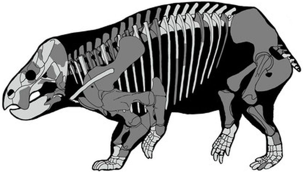 Descubierto un gigantesco antepasado de los mamíferos